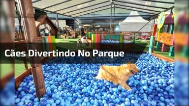 O Melhor Parque De Diversões Para Cachorros, Que Alegria Para Eles!