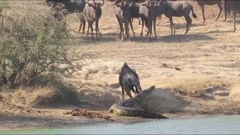 O Mundo Animal Nos Surpreendendo Sempre! Olha Essa Batalha Inacreditável!