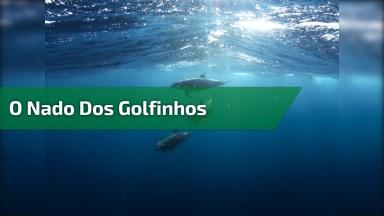 O Nado Dos Golfinhos, Um Peixe Muito Inteligente, Confira E Compartilhe!