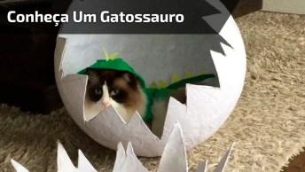 O Nascimento De Um 'Gatossauro', Só Rindo Dessas Coisas Mesmo Hahaha!