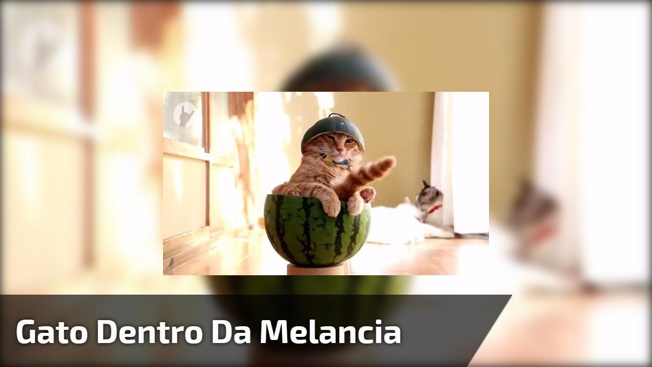Gato dentro da melancia