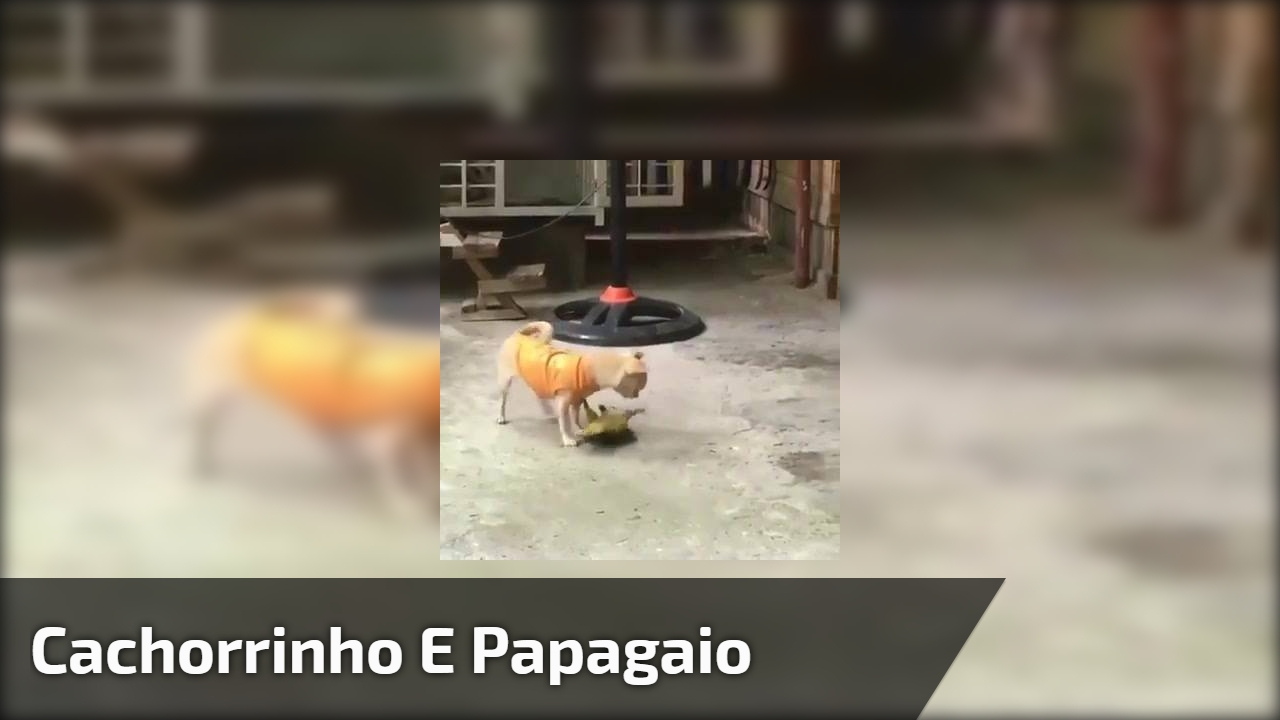 Cachorrinho e papagaio