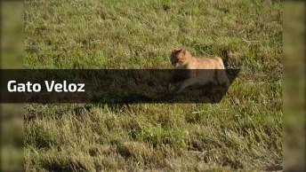 O Que Esta Vindo Correndo Ali? É Uma Foca? É Um Leão-Marinho?