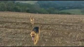O Reencontro De Dois Cachorros Que São Mãe E Filho, Que Lindo!