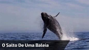 O Salto Inesperado De Uma Baleia Próximo Ao Barco, Confira!