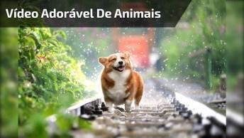O Vídeo Mais Adorável De Animais Que Você Via Ver Hoje, Quanta Fofura!