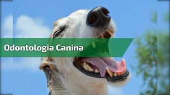 Odontologia Canina, Olha Só Que Trabalho Fantástico Para Os Pets!