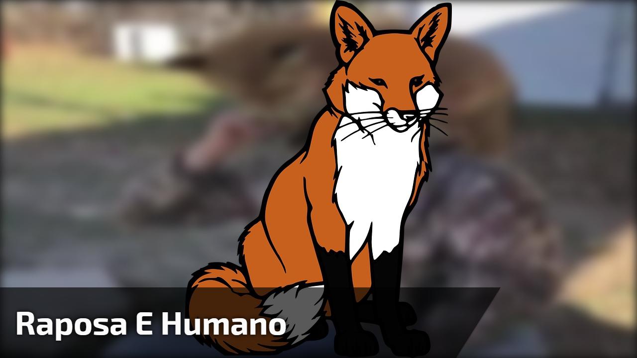 Olha o que essa raposa faz em um humano, muita fofura!