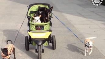 Olha Quem Esta Puxando O Carrinho De Bebês? Ou Seria Um Carrinho De Cachorros. . .