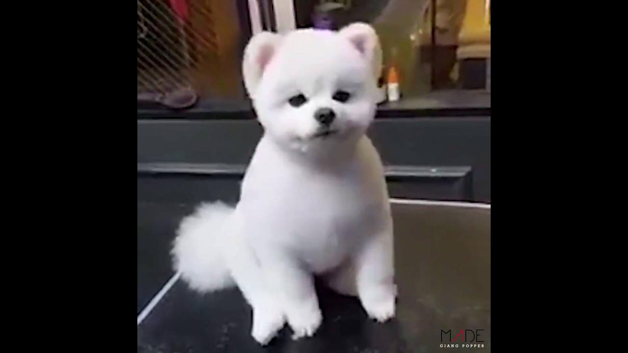 Olha só a fofura deste cãozinho!