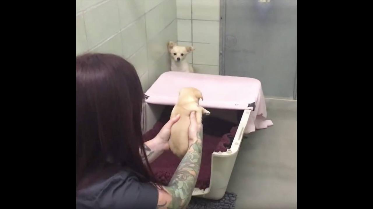 Olha só a reação desta cadelinha ao ver novamente seus filhotes