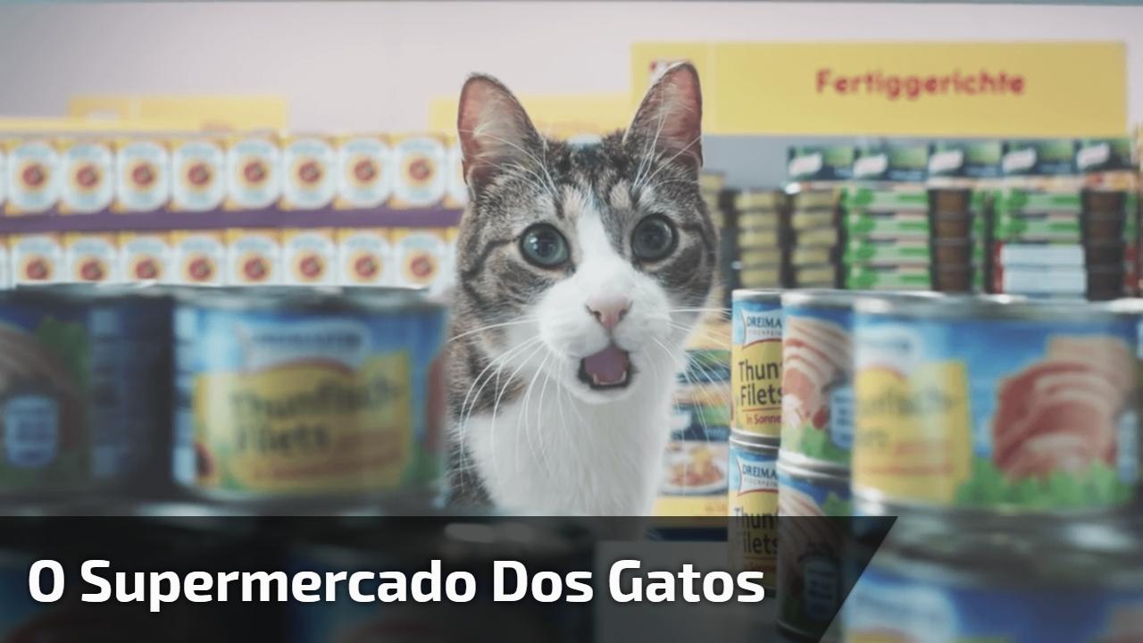 O supermercado dos gatos