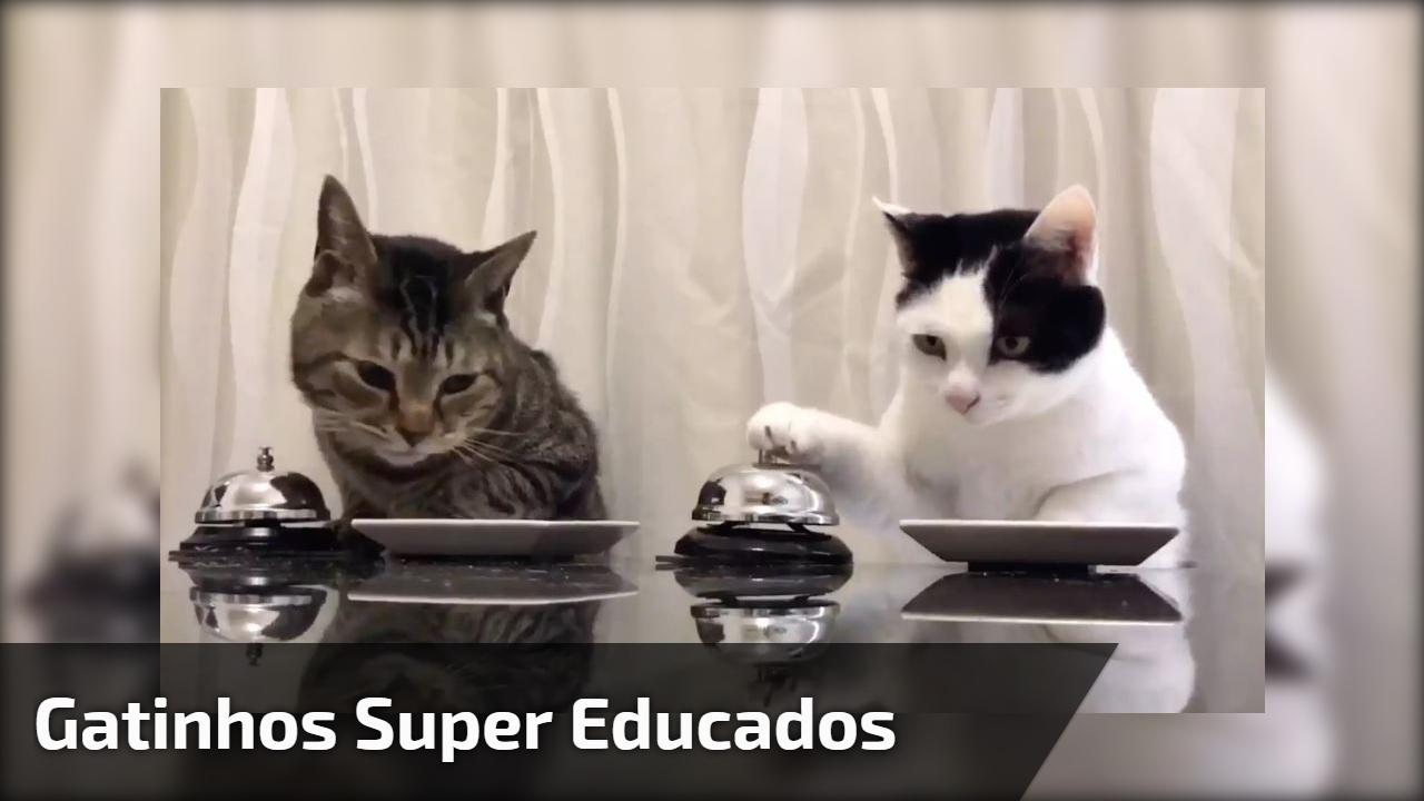 Gatinhos super educados