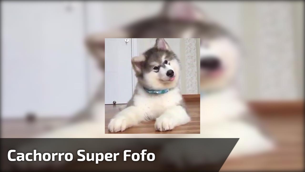 Olha só que fofura esse cachorrinho brincado com o seu dono, é muito lindo!