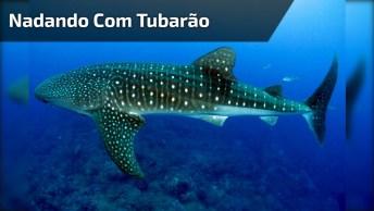 Olha Só Que Magico Esse Vídeo! Nadar Ao Lado De Um Tubarão Baleia!