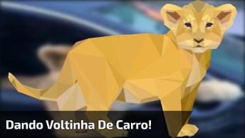 Onça Na Janela De Um Carro, Animal De Estimação Nível Hard Hahaha!