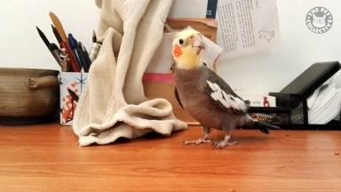 Os Barulhos Mais Engraçados Que Os Pássaros Fazem, Que Engraçado!