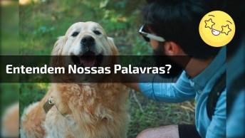Os Cachorros Entendem Ou Não Tudo Que A Gente Fala Para Eles?