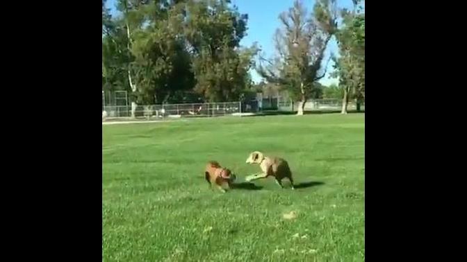 Cachorros mais atrapalhados
