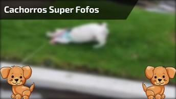 Os Cachorros Mais Engraçados Da Internet, O Que Fazer Com Essas Fofuras?