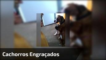 Os Cachorros Mais Engraçados E Arteiros Estão Neste Vídeo, Confira!