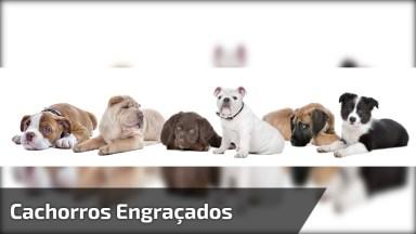 Os Cachorros Mais Engraçados E Inteligentes Do Mundo, Confira!