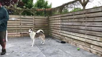 Os Cachorros Mais Felizes Do Mundo Estão Neste Vídeo, Confira!