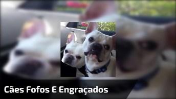 Os Cachorros Mais Fofos E Engraçados Estão Aqui Neste Vídeo!
