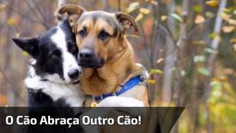 Os Cachorros São Muito Lindos, E Vejam Esses Dois Que Amizade Mais Fofa!