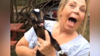 Os Filhotes De Cabras Mais Fofos Do Mundo, Dá Até Vontade De Ter Um!