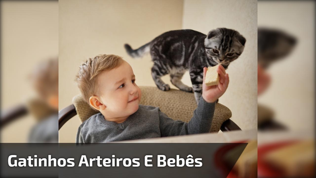 Gatinhos arteiros e bebês