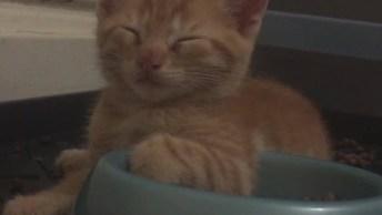Os Gatinhos Mais Preguiçosos Que Você Já Viu, Dormem Até Na Hora De Comer!