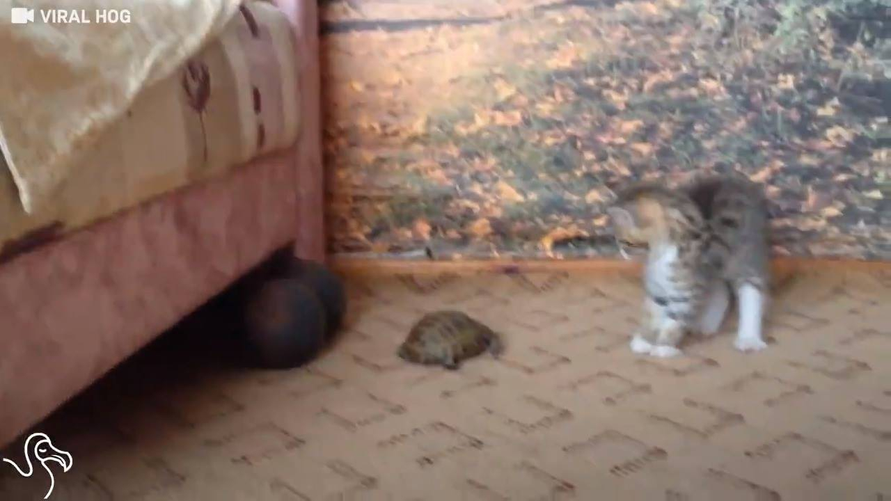 Os gatos e seus medos extremos, kkk!