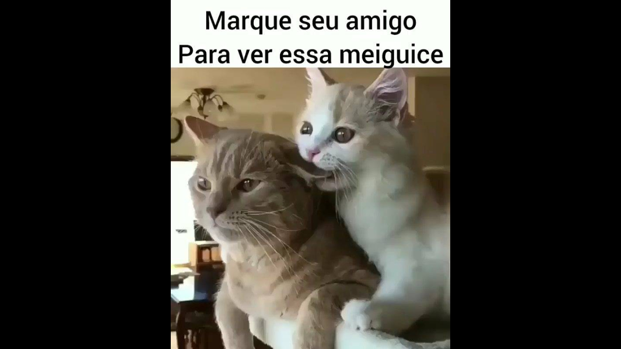 Os gatos mais meigos do dia