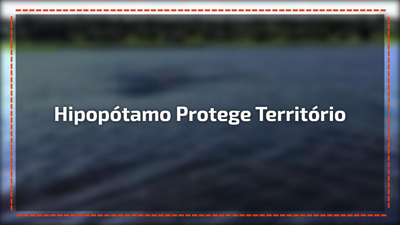 Os Hipopótamos são animais extremamente territorialistas, veja este vídeo!!!