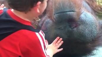Os Macacos São Os Animais Mais Engraçados Do Mundo, Confira!