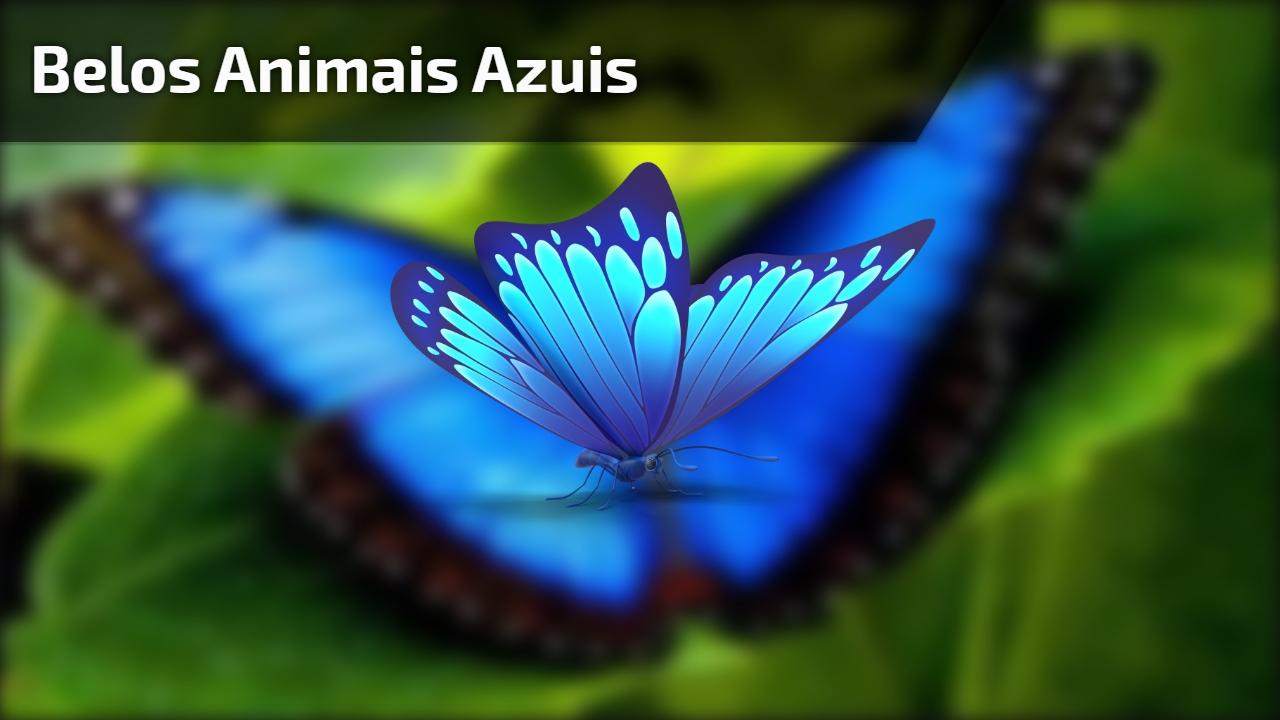 Belos animais azuis