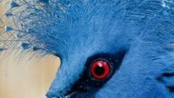 Os Mais Belos Pássaros Do Mundo! Vale A Pena Compartilhar Com Os Amigos!