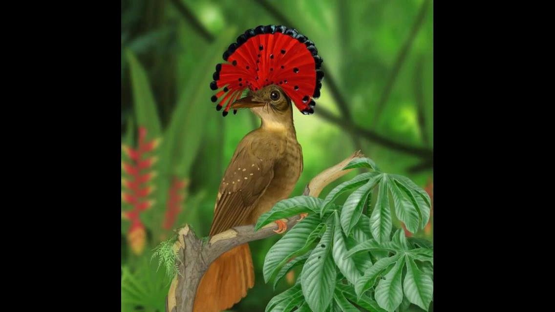 Os pássaros mais lindos espalhados pelo mundo, a natureza é muito bela!