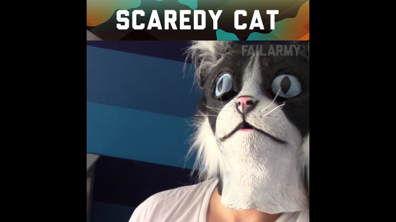 Os sustos mais engraçados de gatos