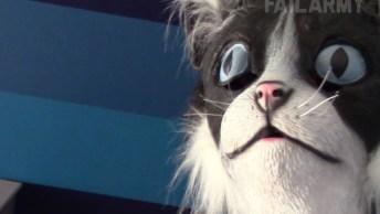 Os Sustos Mais Engraçados De Gatos, Você Vai Dar Muitas Risadas!