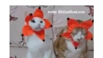 Os Vídeos De Animais São Demais! Veja S´[ O Estas Fofuras De Gatinhos!