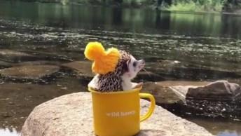 Ouriço Dentro De Caneca Amarela, O Víde Mais Bonitinho Que Você Vai Ver Hoje!