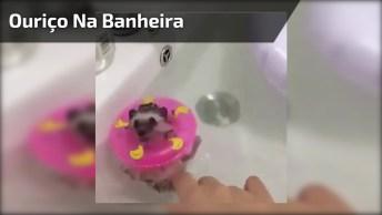 Ouriço Relaxando Na Banheira, Olha Só Que Coisinha Mais Fofa!