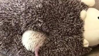 Ouriço Sando De Dentro De Brinquedo De Pelúcia, Olha Só Que Belezinha!