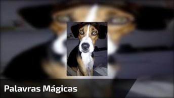 Palavras Mágicas Que Mudam A Reação Do Seu Cão, Muito Legal!