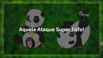Pandas Atacando Tratadora, Cuidado As Imagens São Fortes, Hahaha!
