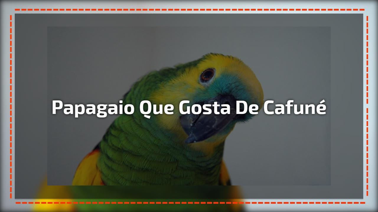 Papagaio que gosta de cafuné