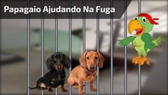 Papagaio Ajuda Cachorrinhos A Fugir, Até Agora Ninguém Foi Preso Hahaha!
