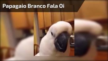 Papagaio Branco Mandando Um Oi, Que Serumaninho Mais Lindinho!